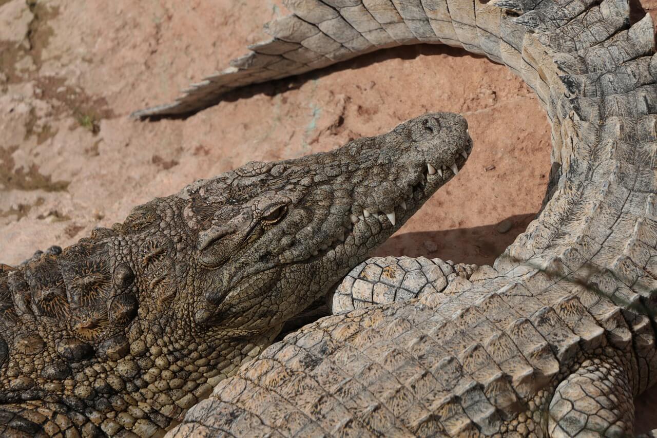 Cocodrilos en Crocopark