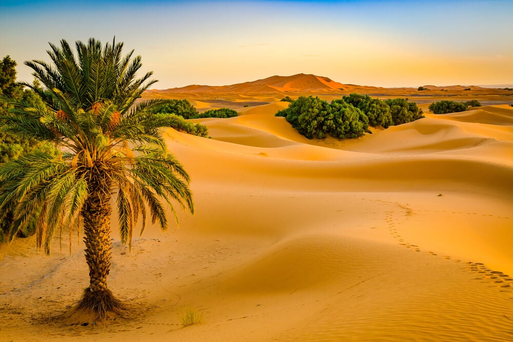 Iniciación a la caminata familiar en el desierto marroquí