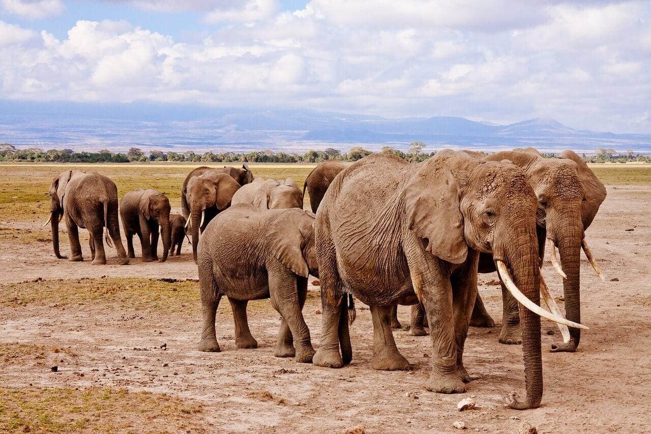 Elefantes en el Parque Nacional Amboseli