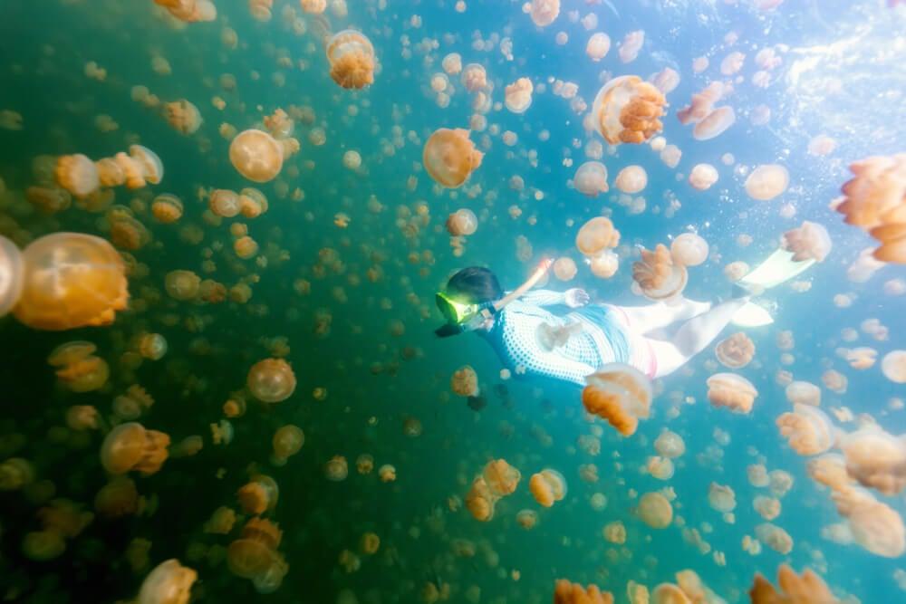 Lago de las Medusas en Palau
