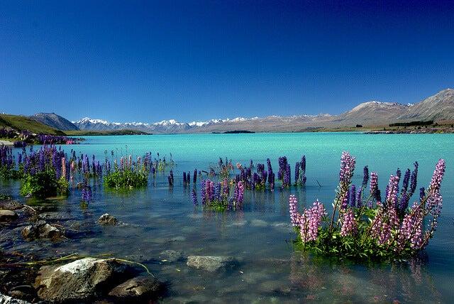 Aguas del lago Tekapo