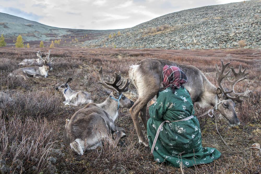Mujer ordeñando a un reno