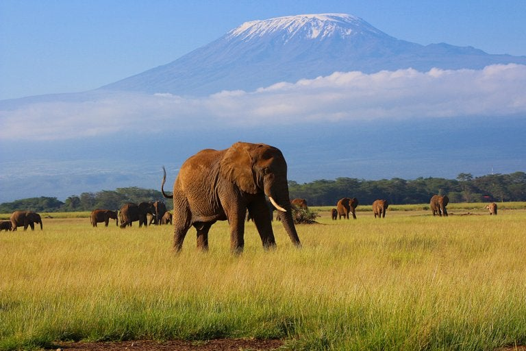 Parque Nacional de Amboseli, un safari al sur de Kenia