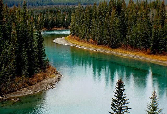 Río Bow en el Parque Nacional Banff