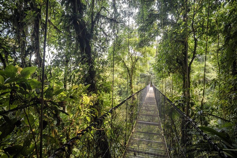 Ruta en el interior de un bosque lluvioso de Belice