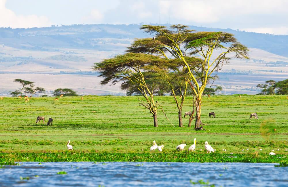 Orilla del lago Naivasha
