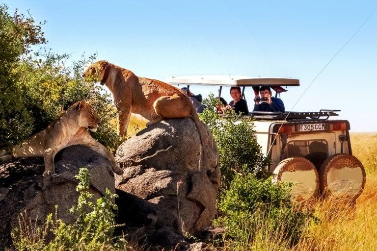 Safari en el norte de Tanzania: reservas que no deben perderse
