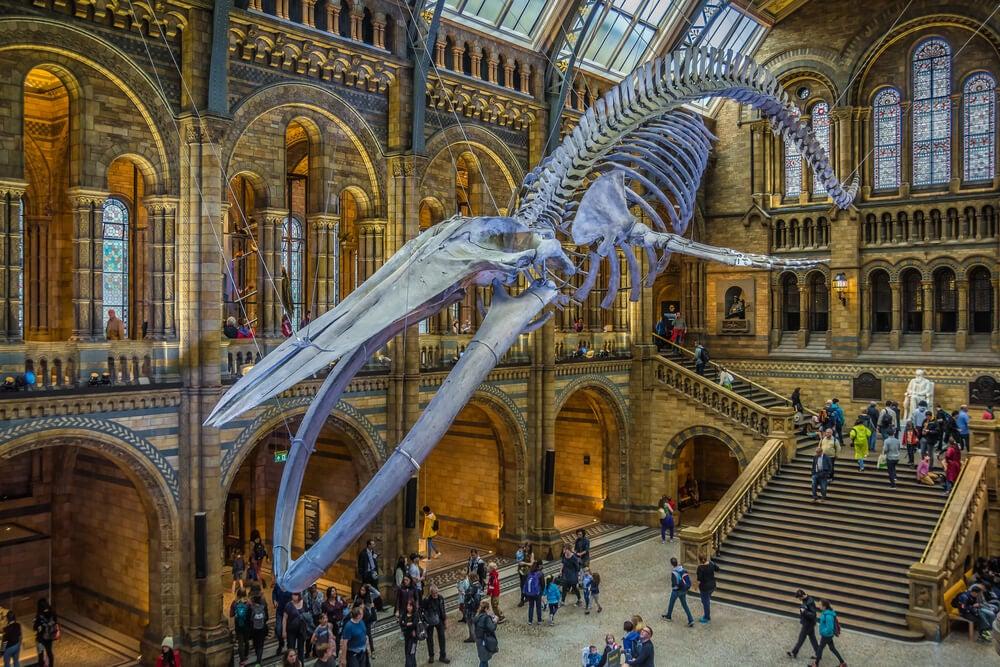 Una visita al Museo de Historia Natural de Londres