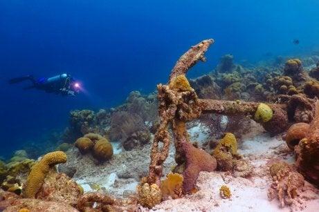 Bueceador en la barrera de coral de México