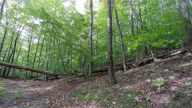 Bosque en Bennington