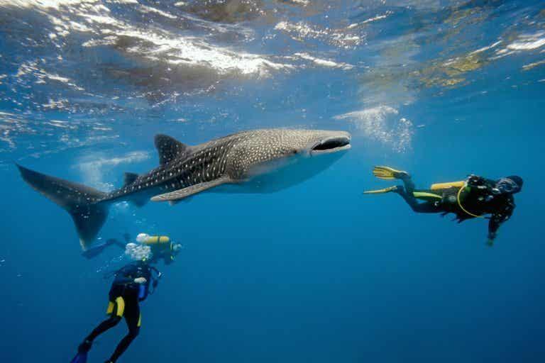 Buceo en Maldivas: conoce su fantástico mundo submarino
