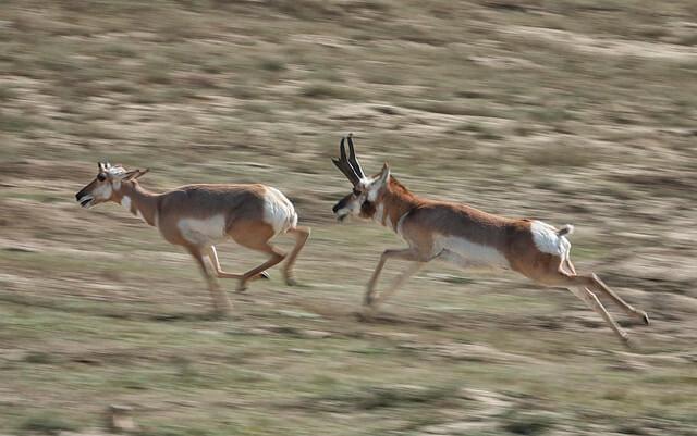 Ciervos corriendo en el parque
