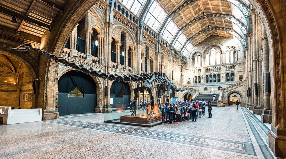 Diplodocus en el museo
