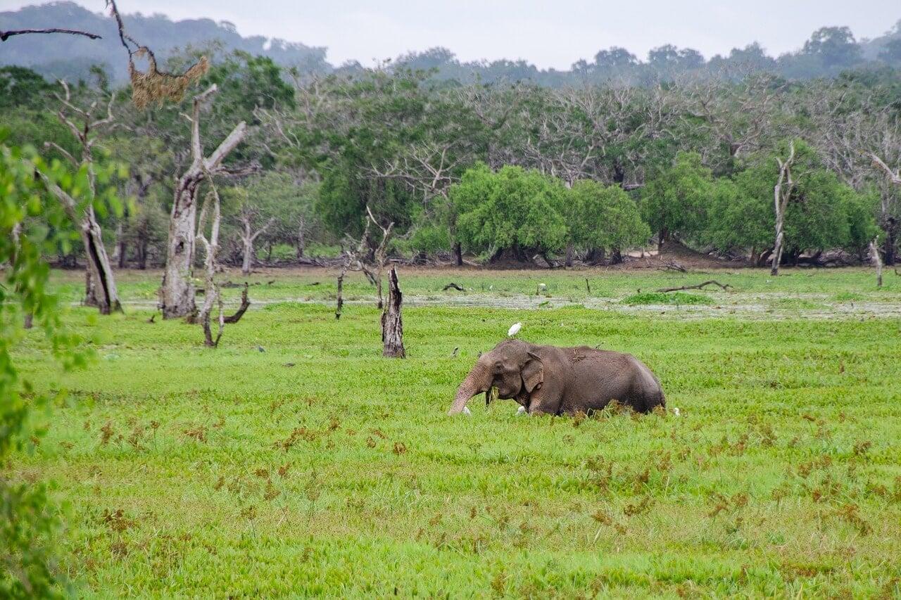 Elefante en el parque