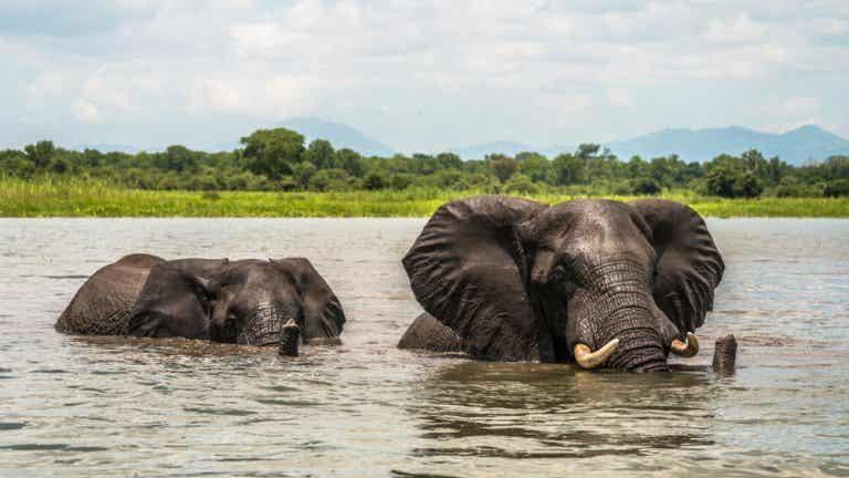 El Parque Nacional Liwonde: naturaleza en Malaui