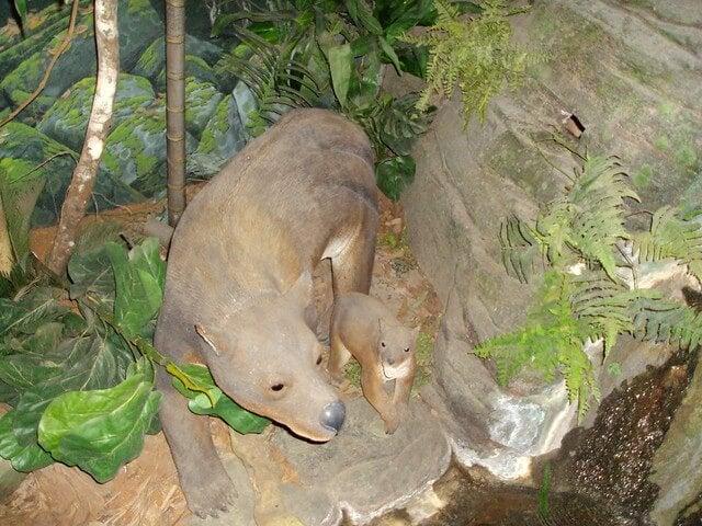 Reproducción en el Museo de Fósiles de Riversleigh