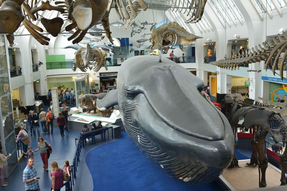 Interior del Museo de Historia Natural de Londres