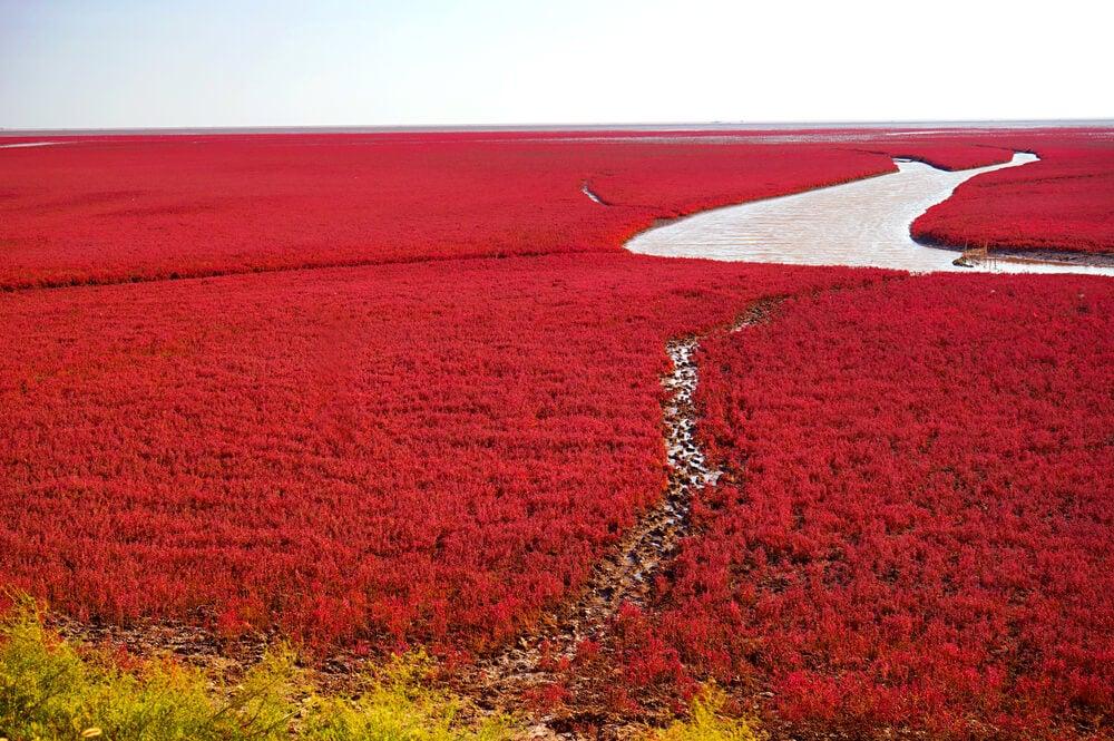 Playa roja, uno de los lugares irreales que ver en China