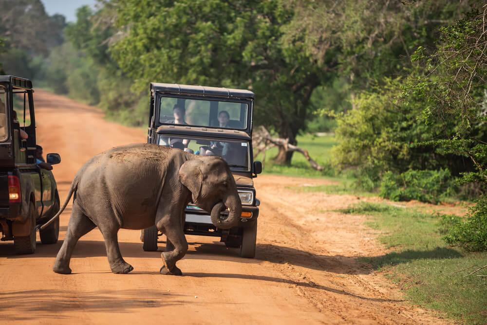 Un safari en el Parque Nacional Yala de Sri Lanka