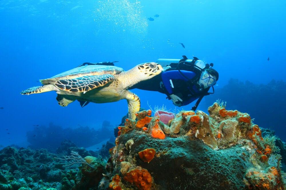 Buceo para explorar los fondos marinos de México