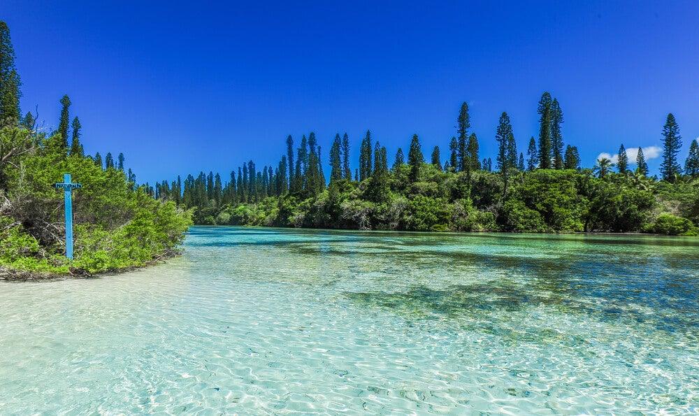 Vegetación típica de la isla de Pinos