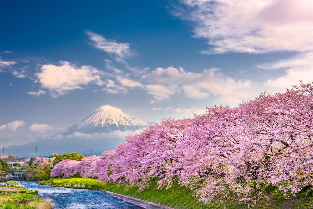 Monte Fuji y cerezos en flor