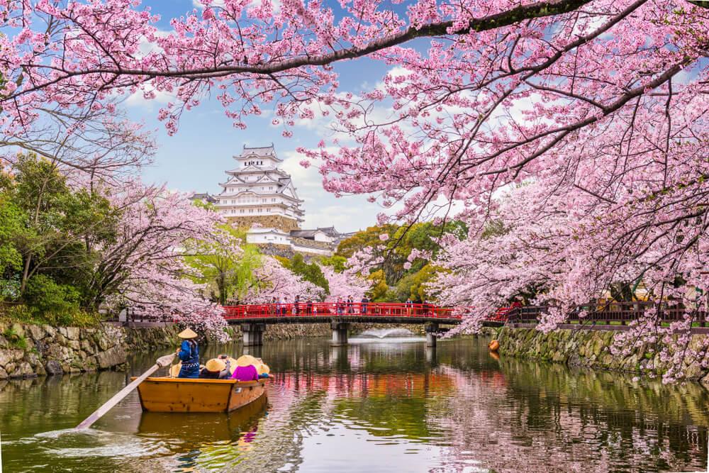 El Hanami, celebrando la primavera en Japón