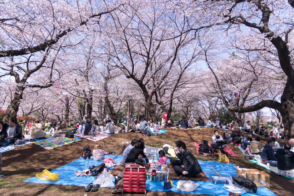 Gente celebrando el Hanami