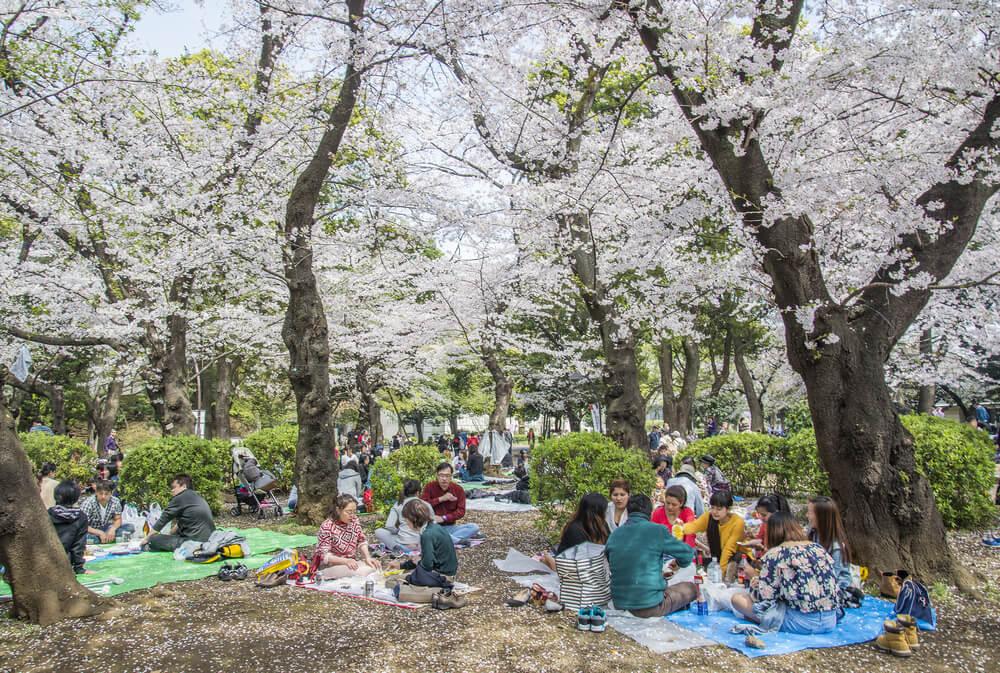 Celebración del Hanami en Tokio