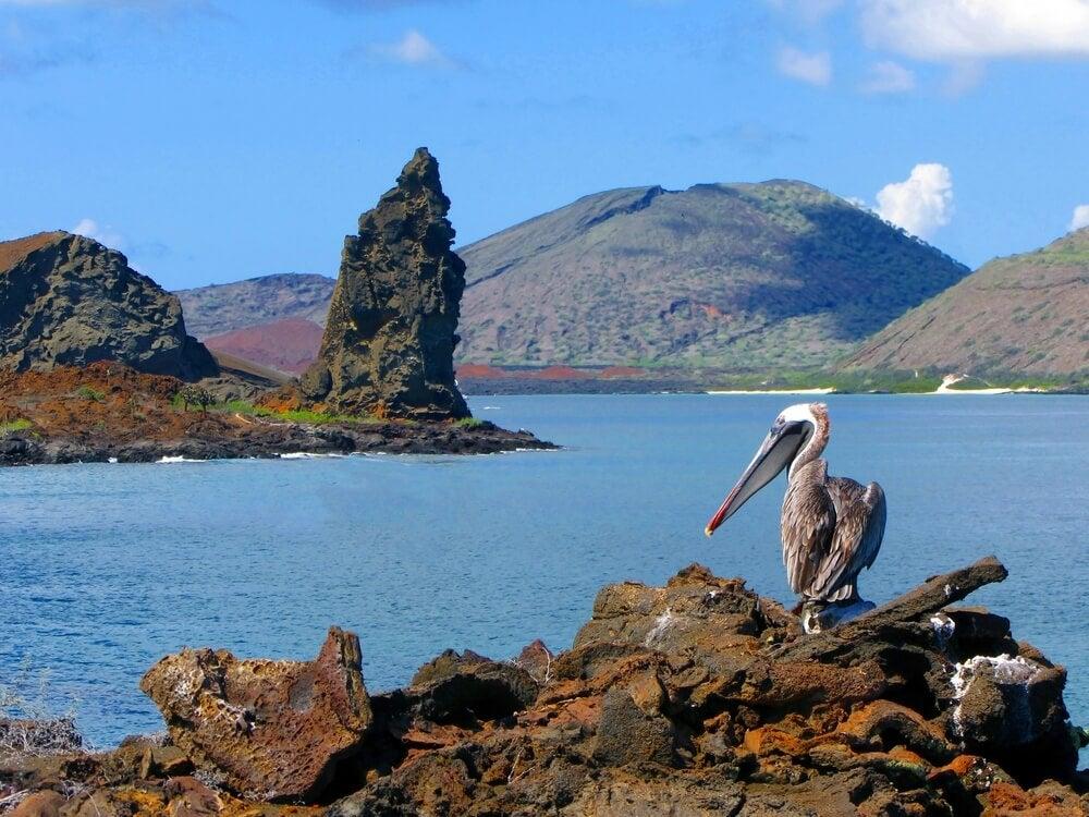 Pelícano en las islas Galápagos