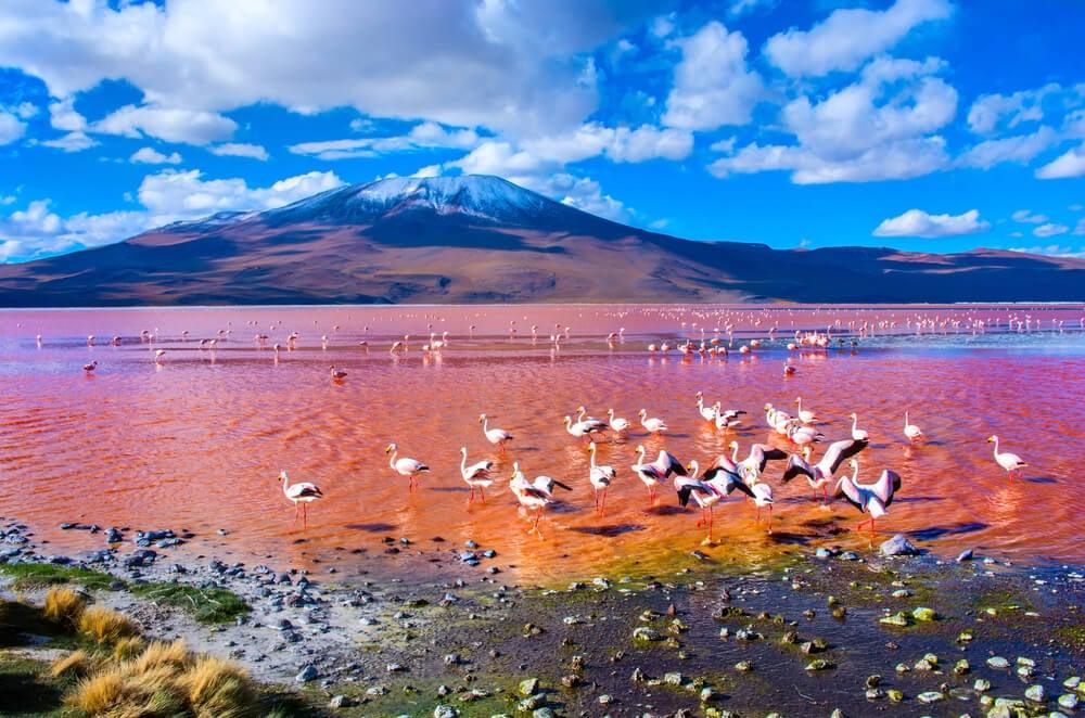 Laguna Colorada enBolivia