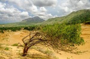 Parque Nacional Macuira en La Guajira
