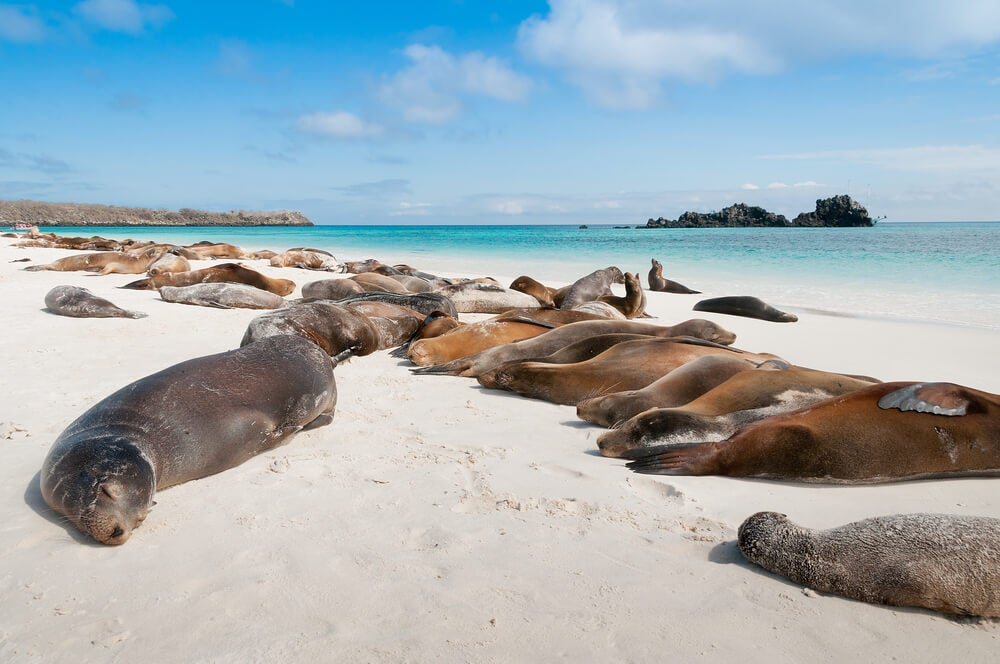 Leones marinos en la isla Española