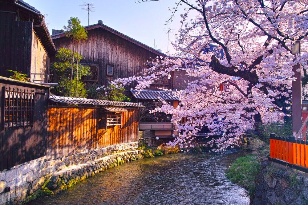 Canal Shirakawa en Kioto