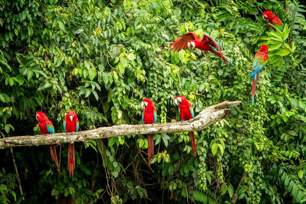 Aves en el Parque Nacional del Manu