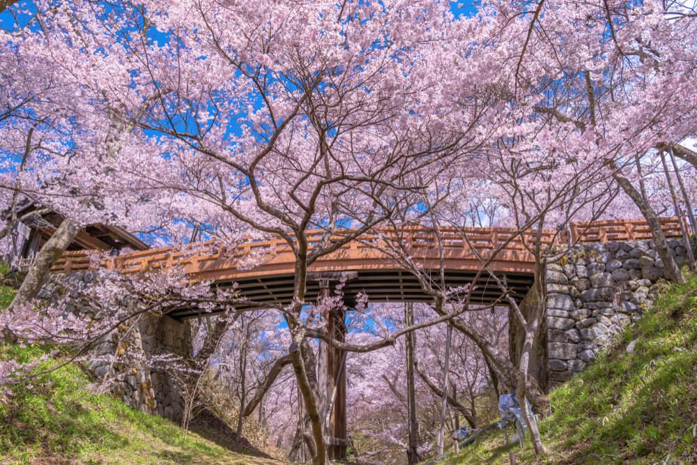Cerezos en Takato