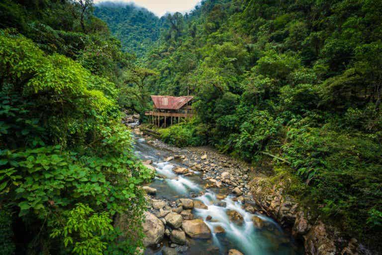 Parque Nacional del Manu: la reserva más protegida de Perú
