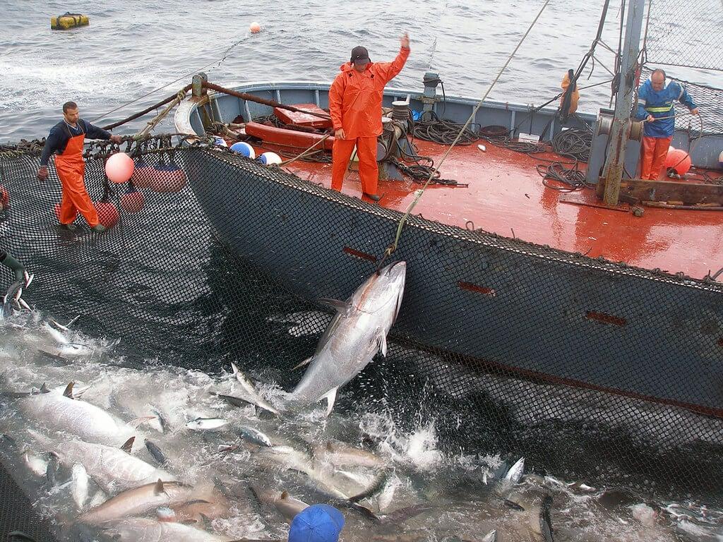 Pesca de almadraba