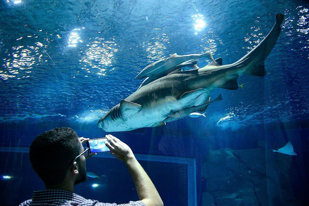 AquaRio, uno de los acuarios de América
