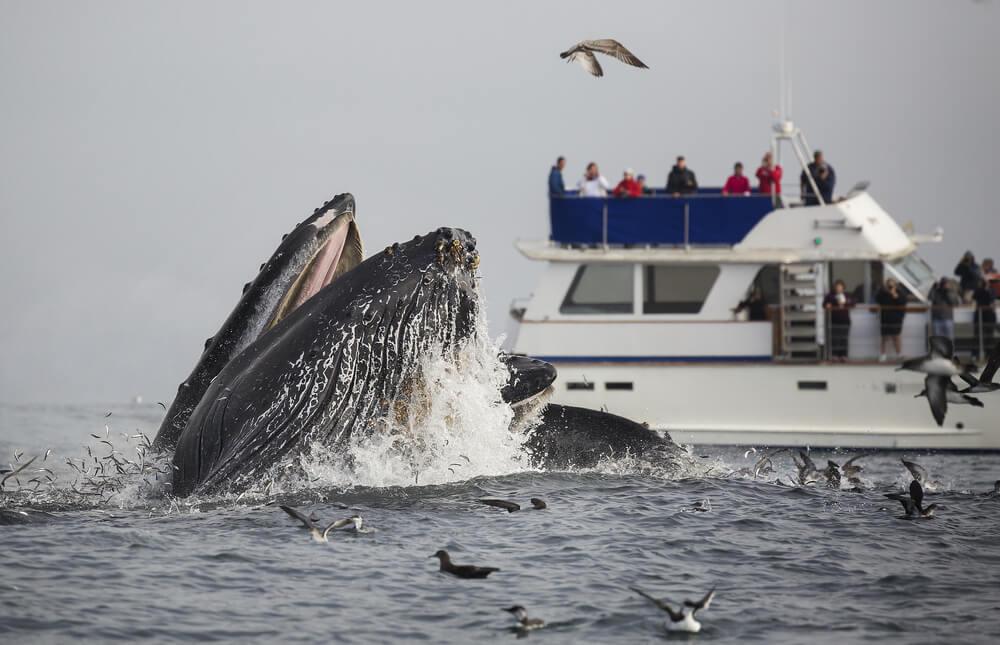 Avistamiento de ballenas en Monterrey