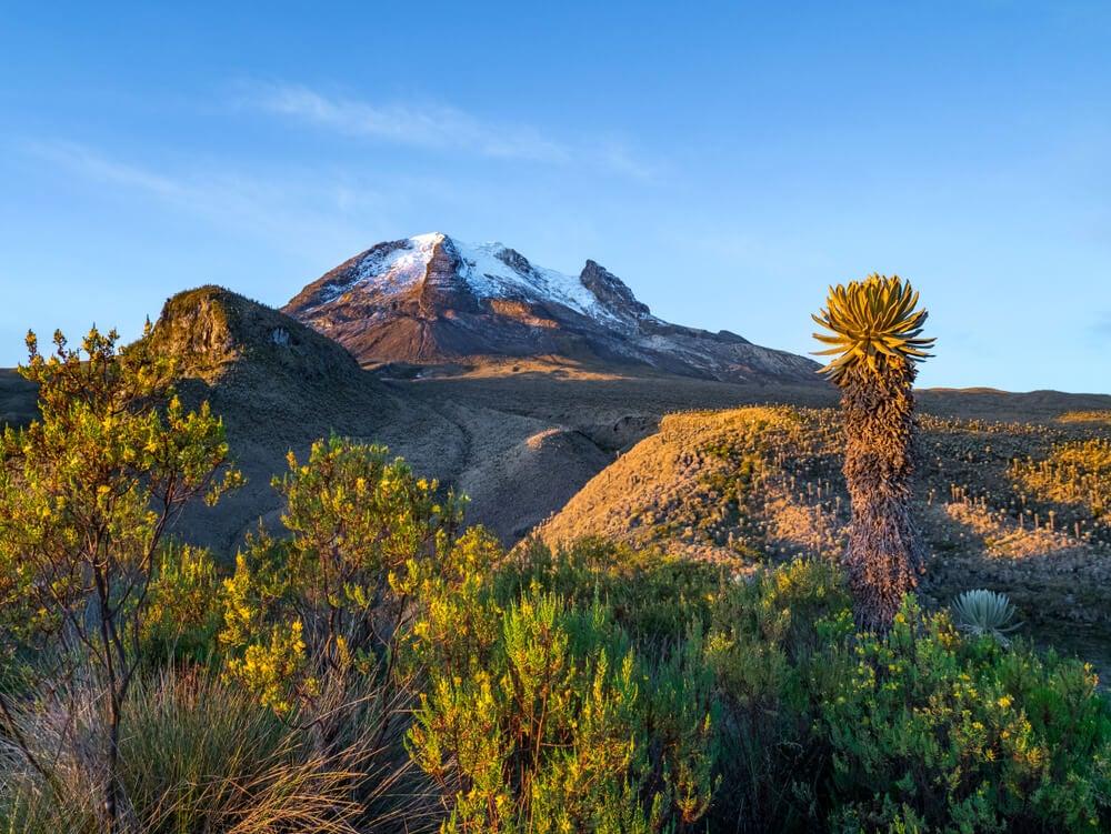 Descubre el Parque Natural Los Nevados en Colombia