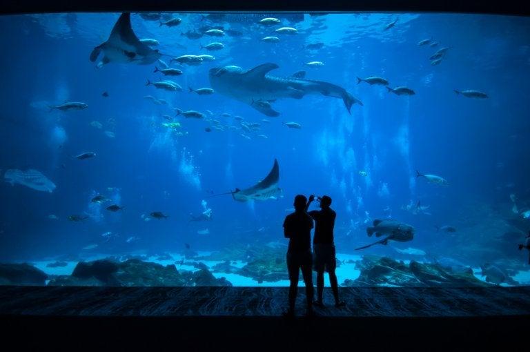 Visitamos los mejores acuarios de América
