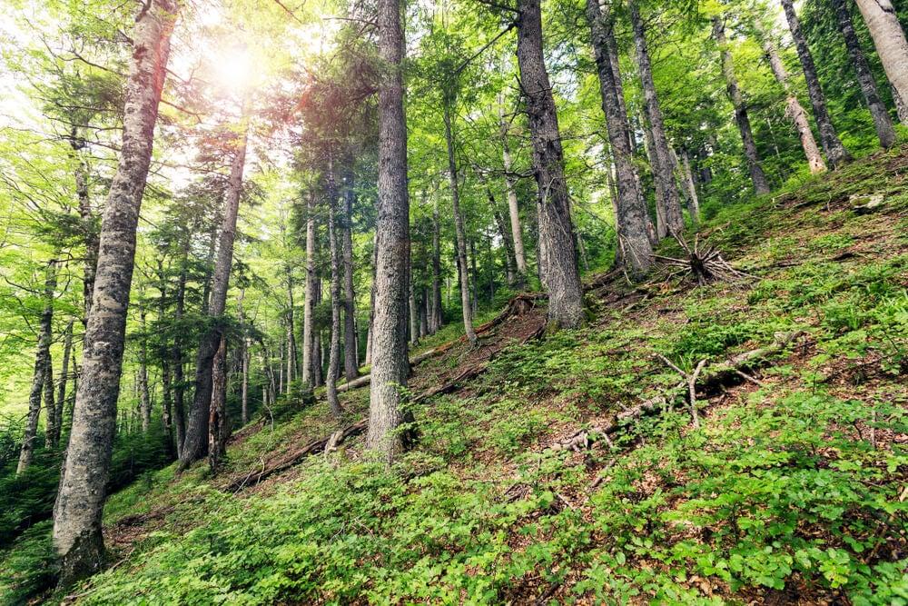 Bosque Perucica