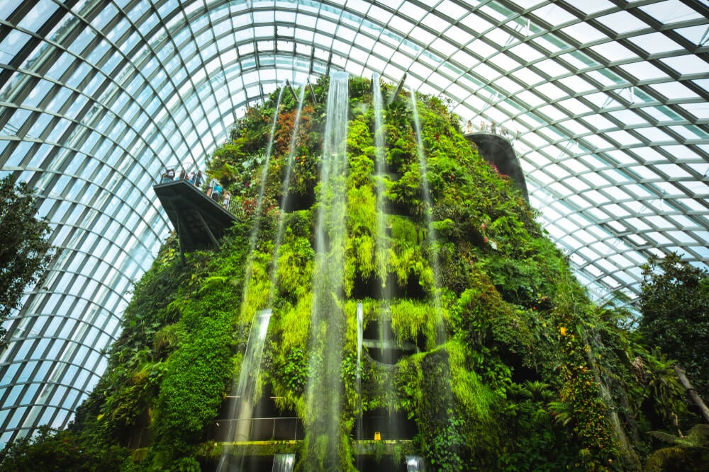 Interior del Cloud Forest