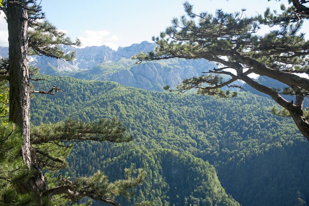 Perucica en Bosnia: una selva tropical en Europa