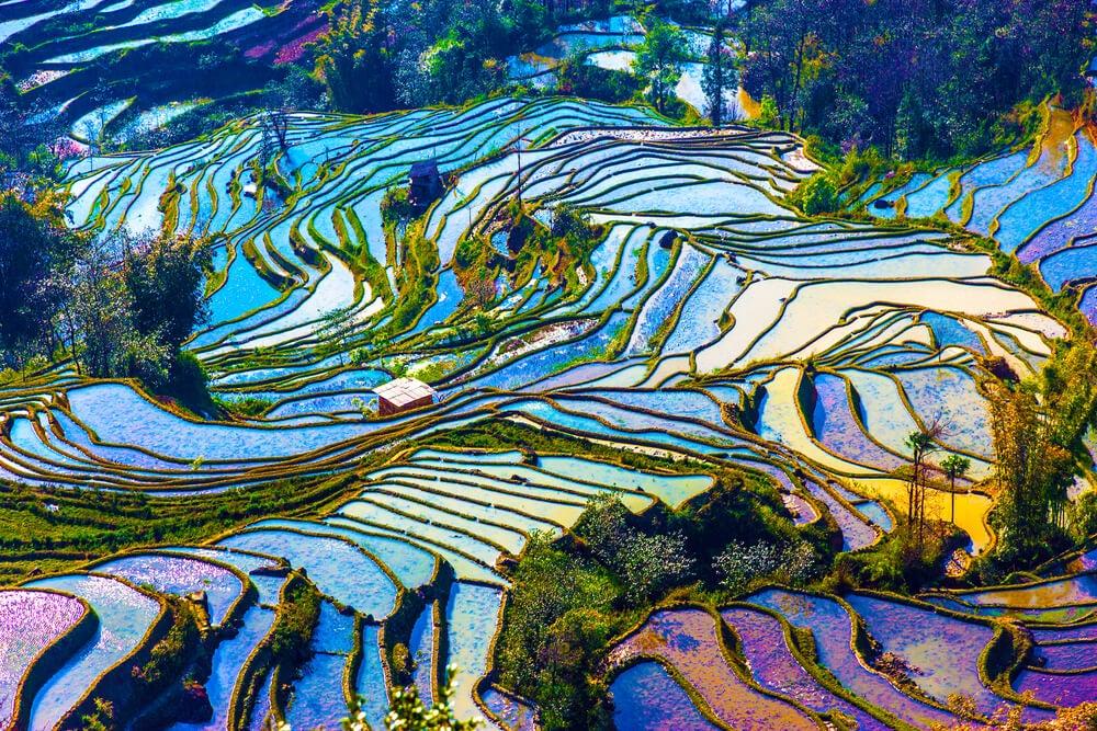 Campos de arroz de Yunnan