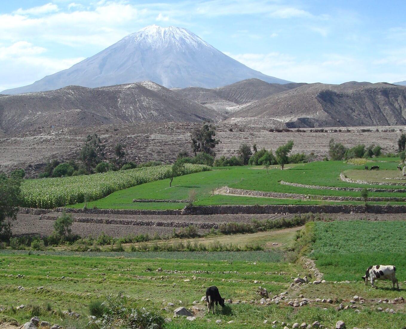 Cultivos en la campiña de Arequipa