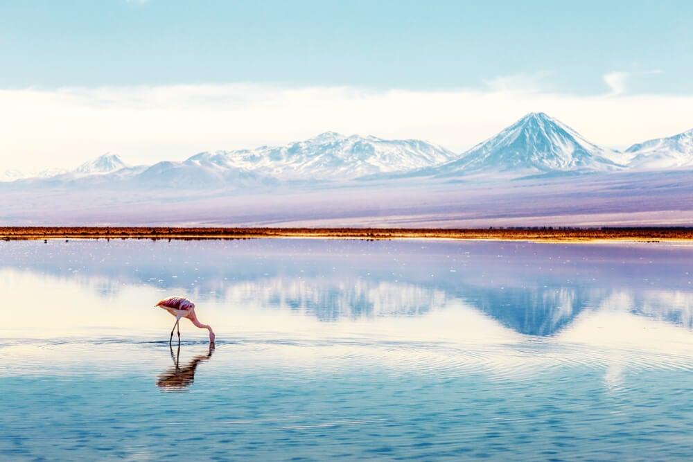 Flamenco en la laguna