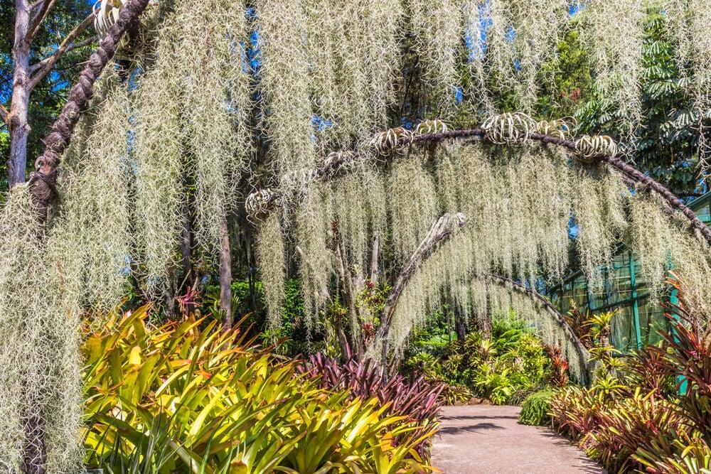 Jardín Botánico de Singapur