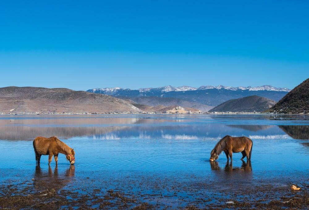 Lago Napahai